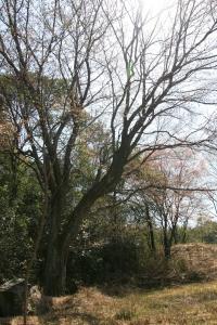 桜 052